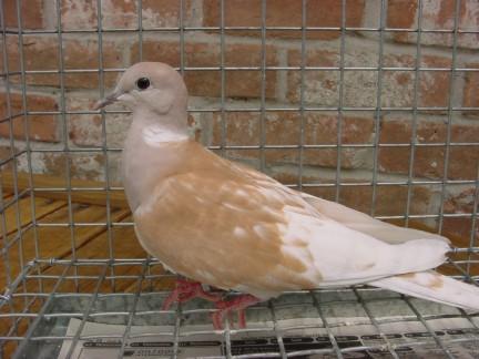 dovepage com - Buy a Dove